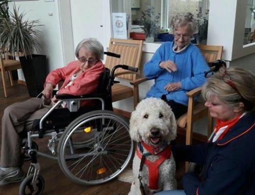 Louie von der Malteser Hundestaffel ist zu Besuch